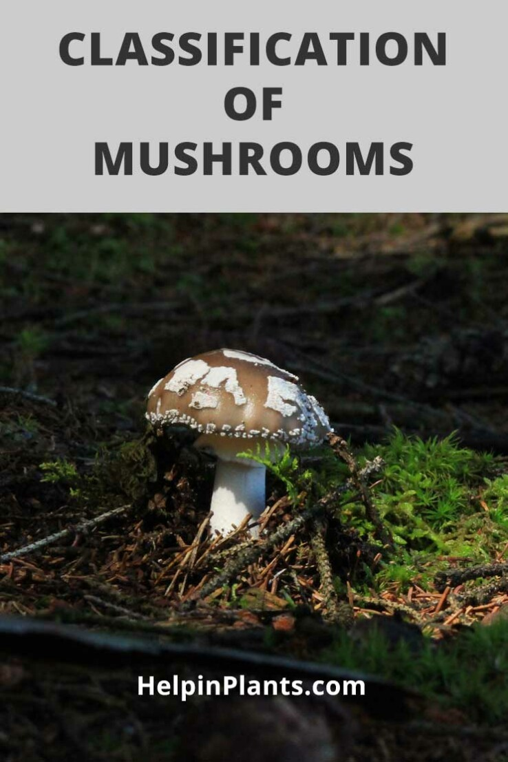 Classification of Mushrooms Based On How They Grow
