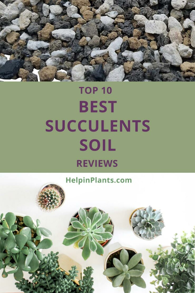 Top 10 Best Succulents Soil Reviews